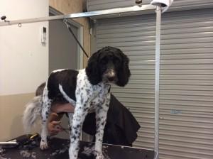 dog grooming, pet groomer, dog groomer, dog clipping, de shedding, deshed dog hair, full dog grooming, dog grooming services, pet grooming, pet grooming services, Peninsula Dog Spa, dog grooming, pet groomer, dog groomer, dog clipping, de shedding, deshed dog hair, full dog grooming, dog grooming services, pet grooming, pet grooming services, Peninsula Dog Spa, dog grooming Frankston East, pet groomer Frankston East, dog groomer Frankston East, dog clipping Frankston East, de shedding Frankston East, deshed dog hair Frankston East, full dog grooming Frankston East, dog grooming services Frankston East, pet grooming Frankston East, pet grooming services Frankston East, Peninsula Dog Spa Frankston East, dog grooming Frnakston, pet groomer Frankston, dog groomer Frankston, dog clipping Frankston, dog hair grooming Frankston,  full dog grooming Frankston, dog grooming services Frankston, dog groomer Frankston, pet grooming services Frankston, Peninsula Dog Spa Frankston,  dog grooming Mornington Peninsula, pet groomer Mornington Peninsula, dog groomer Mornington Peninsula, dog clipping Mornington Peninsula, full dog grooming Mornington Peninsula, dog grooming services Mornington Peninsula, pet grooming Mornington Peninsula, dog grooming services Mornington Peninsula, Peninsula Dog Spa Mornington, dog grooming Carrum Downs, pet groomer Carrum Downs, dog groomer Carrum Downs, dog clipping Carrum Downs, full dog grooming Carrum Downs, dog grooming services Carrum Downs, dog clip Carrum Downs, dog services Carrum Downs, Peninsula Dog Spa Carrum Downs, dog grooming Langwarrin, dog groomer Langwarrin, dog groomer Langwarrin, dog clipping Langwarrin, full dog grooming Langwarrin, dog grooming services Langwarrin, Peninsula Dog Spa Langwarrin