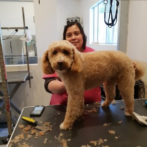 dog grooming, pet groomer, dog groomer, dog clipping, de shedding, deshed dog hair, full dog grooming, dog grooming services, pet grooming, pet grooming services, Peninsula Dog Spa, dog grooming, pet groomer, dog groomer, dog clipping, de shedding, deshed dog hair, full dog grooming, dog grooming services, pet grooming, pet grooming services, Peninsula Dog Spa, dog grooming Frankston East, pet groomer Frankston East, dog groomer Frankston East, dog clipping Frankston East, de shedding Frankston East, deshed dog hair Frankston East, full dog grooming Frankston East, dog grooming services Frankston East, pet grooming Frankston East, pet grooming services Frankston East, Peninsula Dog Spa Frankston East, dog grooming Frnakston, pet groomer Frankston, dog groomer Frankston, dog clipping Frankston, dog hair grooming Frankston,  full dog grooming Frankston, dog grooming services Frankston, dog groomer Frankston, pet grooming services Frankston, Peninsula Dog Spa Frankston,  dog grooming Mornington Peninsula, pet groomer Mornington Peninsula, dog groomer Mornington Peninsula, dog clipping Mornington Peninsula, full dog grooming Mornington Peninsula, dog grooming services Mornington Peninsula, pet grooming Mornington Peninsula, dog grooming services Mornington Peninsula, Peninsula Dog Spa Mornington, dog grooming Carrum Downs, pet groomer Carrum Downs, dog groomer Carrum Downs, dog clipping Carrum Downs, full dog grooming Carrum Downs, dog grooming services Carrum Downs, dog clip Carrum Downs, dog services Carrum Downs, Peninsula Dog Spa Carrum Downs, dog grooming Langwarrin, dog groomer Langwarrin, dog groomer Langwarrin, dog clipping Langwarrin, full dog grooming Langwarrin, dog grooming services Langwarrin, Peninsula Dog Spa Langwarrin
